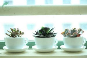 Showcase Your Houseplants
