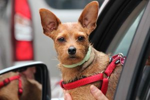 dog car seat